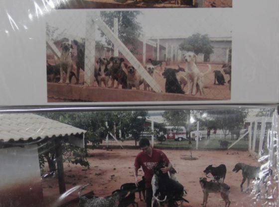 Todos os animais passam por consulta ao entrar na ONG, afirma a diretoria do projeto. Na imagem, a área onde ficam os cachorros (Foto: Acervo)